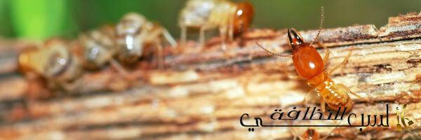 شركة مكافحة النمل الأبيض بالرياض, مكافحة النمل الأبيض بالرياض, شركة مكافحة النمل الأبيض, افضل شركة مكافحة النمل الأبيض بالرياض